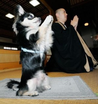 2670092483-buddhist-dog-prays-worldly-desires