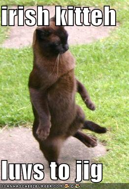 Funny-pictures-irish-jig-cat